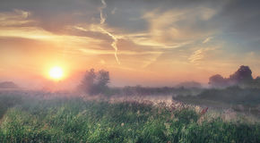 Bright sunrise on summer foggy morning. Landscape of summer nature on river bank. Stock Photography