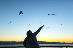 Bright Sunrise and Woman waving with Hand welcoming Sea Gulls. Bright Sunrise at Istanbul City Harbour and Silhouette of Person raising and waving with Hand Stock Photography