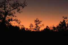 Bright sunset in the Australian bush Stock Photos