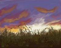 Bright sunset on a background of field grass. Sunset in the field Stock Images