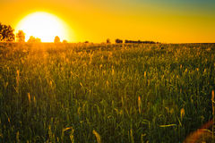 Bright sunset over green field. Stock Photo