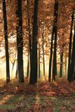 Bright sunshine in the autumn forest Stock Photography