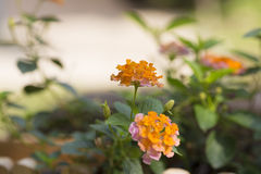 On bright sunshine days, there are beautiful orange and red flowers. Stock Photo