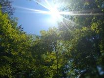 Bright sunshine stock image