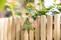 On bright sunshine and orange and red flowers on the edge of a wooden fence with brown color. Stock Photo
