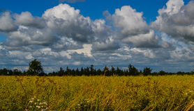 Bright sunshine and white big clouds in the field,  Denmark Royalty Free Stock Photo