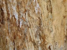 Bright surface of the tree royalty free stock photo