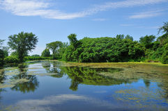 Bright swamp. A luxuriant swamp with algae cover Stock Photo