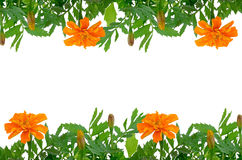 Bright Tagetes flowers frame Royalty Free Stock Images