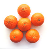 Bright tangerine. Good morning for you from me Royalty Free Stock Photo