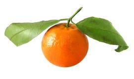 Bright tangerines Stock Photography