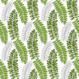Bright textile pattern with acacia leaves. Vector background for packaging and fabric design Royalty Free Stock Photography