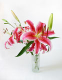Bright tiger lilies Stock Images
