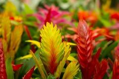 Bright  Tillandsia Stock Images