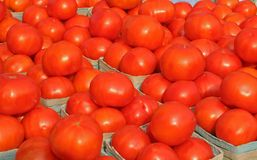 Bright Tomatoes 2. Brightly colored tomatoes in natural light stock images