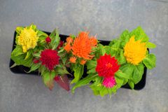 The bright tops of flowers of different colors create fun floral Stock Photo
