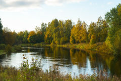 Bright trees on lake shore, Karelia, Russia. Autumn forest on shore of a small lake in sunny day, Karelia, Russia Stock Image