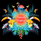 Bright tropical background Royalty Free Stock Photo