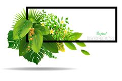 Bright natuer background with jungle plants. tropical leaves. Bright tropical background with grass plants. Exotic pattern with tropical grass. Vector Royalty Free Stock Photography
