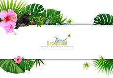 Bright tropical background with jungle plants. Stock Images