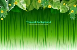Bright tropical background with jungle plants. Exotic pattern with tropical leaves. Vector illustration Stock Photography