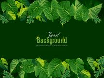 Bright tropical background with jungle plants. Exotic pattern wi Stock Photos