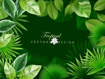 Bright tropical background with jungle plants. Stock Image