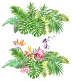 Bright tropical borders with jungle plants. stock illustration