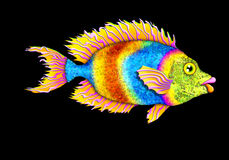 Bright tropical fish royalty free stock photos