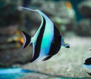 Bright tropical fish n stock photo