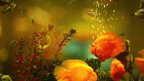 Bright tropical fishes stock video footage