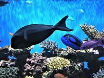 Bright Tropical Fishes and Sea Life Royalty Free Stock Image