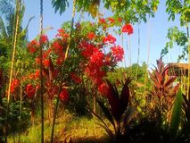 Bright tropical flowers moving in the wind. stock footage