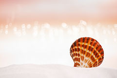 Bright tropical sea shell on white sand with festive glitter Royalty Free Stock Images