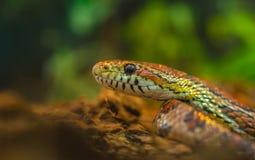 Bright tropical snake in natural habitat royalty free stock image