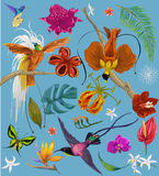 Bright tropican birds and flowers Stock Images