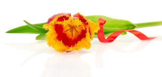 The bright tulip decorated by a tape Royalty Free Stock Images
