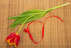 Bright tulip and tape Stock Images