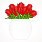 Bright tulips. Stock Image