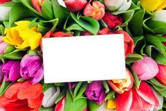 Free Bright Tulips Stock Photography - 37964922