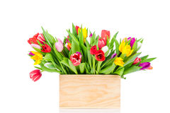 Bright tulips in the box Royalty Free Stock Images
