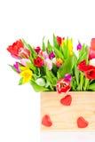 Bright tulips in the box Stock Image