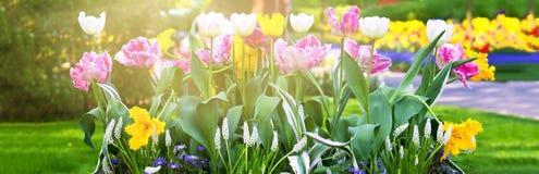 Bright flowerbed. Bright tulips flowerbed in a spring garden stock photo