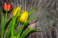Bright tulips on wood. Background stock photo
