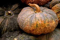 Bright two-tone color pumpkin among dark color others. Background Royalty Free Stock Photo