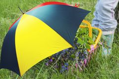 Bright umbrella . To collect wild flowers. Royalty Free Stock Image