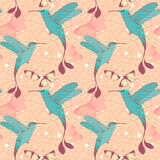 Bright vector pattern with colibri birds and Stock Image