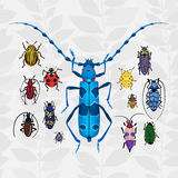 Bright vector set with colorful bugs. Drawing of beetles. Insect on the background with gray leaves. Cartoon bug illustration Stock Photography