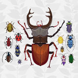 Bright vector set with colorful bugs. Stock Image