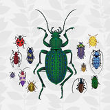 Bright vector set with colorful bugs. Drawing of beetles. Insect on the background with gray leaves. Cartoon bug illustration Stock Images